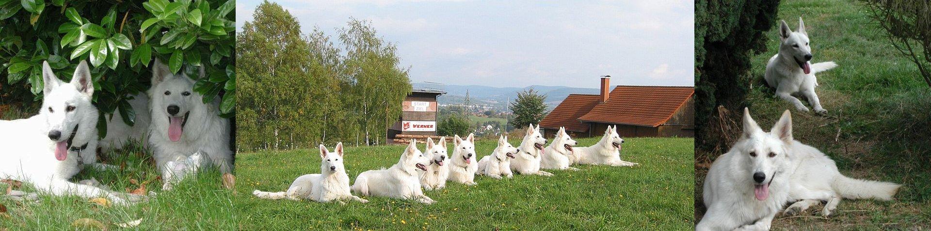 La maison des bergers blancs